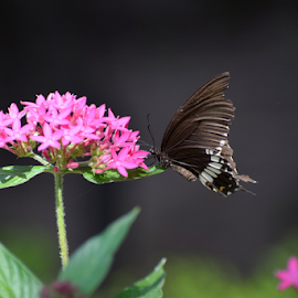 Wild Tiny Flowers by Vivek Sharma - Flowers Flowers in the Wild ( vivekclix, butterfly, nature, vivek, beauty in nature, beauty, flower,  )