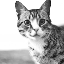 by Marian Ene - Animals - Cats Portraits
