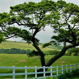 Big Island Beauty by Beth Bowman - Nature Up Close Trees & Bushes (  )