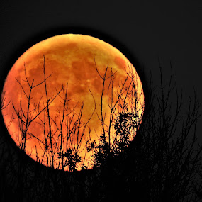 Moon Rising by Kathy Woods Booth - Landscapes Starscapes ( michigan, moon, harvest, dusk, moonlight, moonrise )