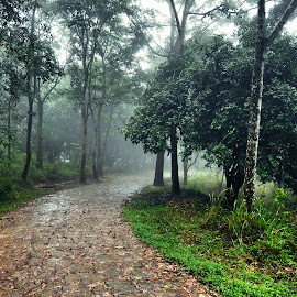 after the rain by Aritra Ghosh - City,  Street & Park  Neighborhoods