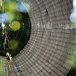 Web by Barbara Horner - Nature Up Close Webs ( macro, nature, spiderweb, white, web )