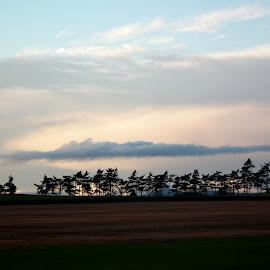 Treeline by Scott Hay - Landscapes Prairies, Meadows & Fields ( clouds, trees, landscape, fields, skyscape,  )