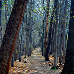 Let's Take a Walk by Rob Kovacs - Landscapes Forests (  )