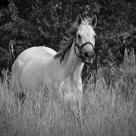 by Rob Ebersole - Animals Horses