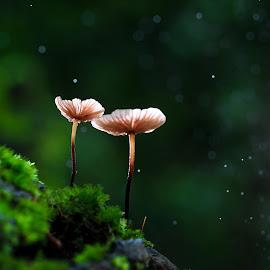 Together by Tuan Pham - Nature Up Close Mushrooms & Fungi ( macro, green, 100mm, vietnam, canon )