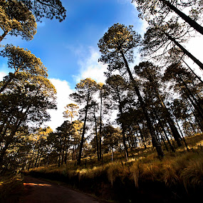 Road to volcano by Cristobal Garciaferro Rubio - Landscapes Forests ( clouds, mountain, trees, forest, road )
