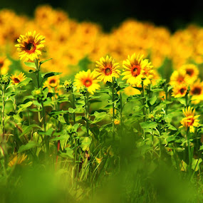 by Sandy Darnstaedt - Flowers Flowers in the Wild (  )