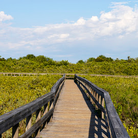 Park Walkway by Bill Telkamp - City,  Street & Park  City Parks ( nature, park, outdoors, walkway, beach )