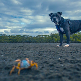 crab meets dog by James Collis - Animals - Dogs Portraits