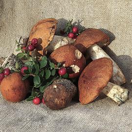 Mushrooms by Mārīte Ramša - Artistic Objects Still Life