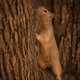 Squirrel Camo by Eric Yiskis - Animals Other Mammals ( rx100iii, camoflage, wildlife, zion, squirrel )