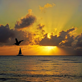 Bird, Boat & Beauty by Carrie Cole - Landscapes Sunsets & Sunrises ( clouds, bird, sunset, ocean, sailboat, caribbean, sun rays )