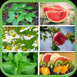 Plantas y frutas medicinales gratis For PC (Windows & MAC)