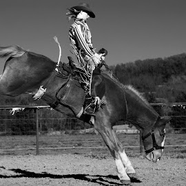 Buck by Joel Thompson - Sports & Fitness Rodeo/Bull Riding ( bull rider, black and white, buck, horse, action, sports, rodeo, bronco, bucking, photo, shot )