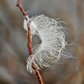 Down. by Carolyn Kernan - Nature Up Close Other Natural Objects (  )