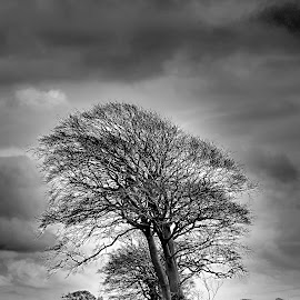 by Michael Parkes - Nature Up Close Trees & Bushes (  )