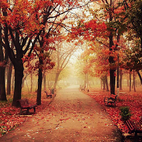Autum desire by Ion Alexandra - City,  Street & Park  City Parks ( benches fall leaves autumn colors park bucharest,  )