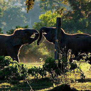 E:\My Photos\Nepal\_DSC0568.jpg