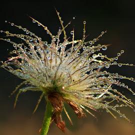 by Miroslava Winklerová - Nature Up Close Other plants