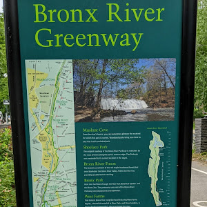 Bronx River Greenway Muskrat Cove From the river's banks, you can sometimes glimpse the muskrat for which this park is named. Woodland paths bring you close to the river in this secluded ...