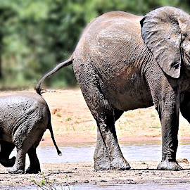 Mom & I at the river.... by Pieter J de Villiers - Animals Other