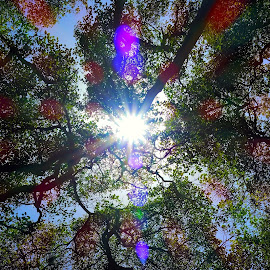 The Canopy by Donald Huff - Abstract Patterns ( abstract, trees, light, sun rays, sun )