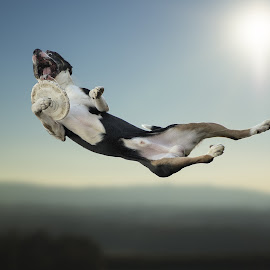 Using arm by Claudio Piccoli - Animals - Dogs Playing ( flying, dogs, dogsinaction, discdog, action, frisbee )