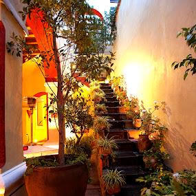Stairs and flowers  by Cristobal Garciaferro Rubio - Buildings & Architecture Architectural Detail ( stair, mexico, puebla, trees, leaves, flower )
