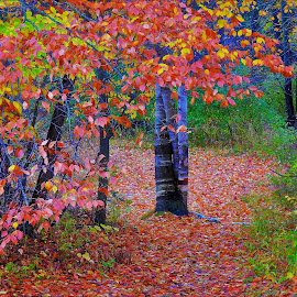 A Blanket Of Leaves by Kathy Woods Booth - City,  Street & Park  City Parks ( park, tree, autumn leaves, autumn, leaves )