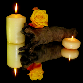 by Kris Pate - Artistic Objects Other Objects ( flames, rosebud, reflection, wood, flora, candlelight, reflections, candle flame, rose bud, log, flame, black background, candle flames, rose, candle, candles, candle light, reflect, black, floral, flower )