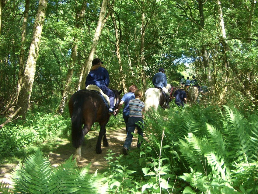 A summer walk in the woods at Bradbourne
