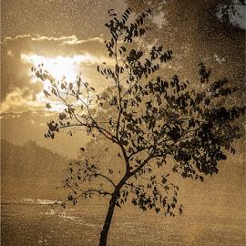 by Maricha Knight van Heerden - Nature Up Close Trees & Bushes ( nature, tree, sunset, rain, sun )
