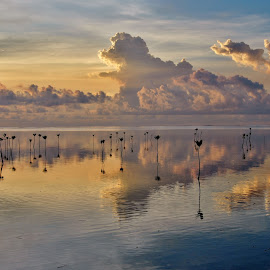 Mirror by Say Bernardo - Landscapes Cloud Formations ( mirror, sunset, clouds, mangrove, water )