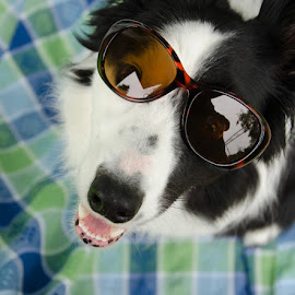 Summer Dayz by Cathy Abbott - Animals - Dogs Portraits