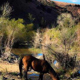 by Margaret Dziolek - Animals Horses