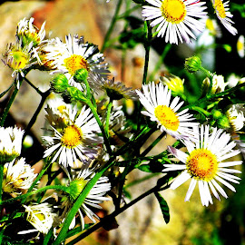 by Martin Stepalavich - Flowers Flowers in the Wild