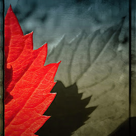 An autumn leaf on a tree .... by Pete Schmit - Nature Up Close Other plants