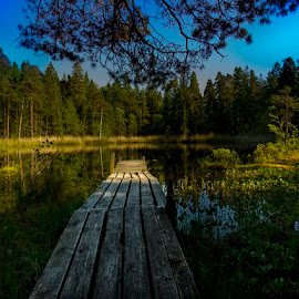 Gran Vattnet by Nicklas Sjoberg - Landscapes Forests ( water, sweden, tree, summer, lake, relax, tranquil, relaxing, tranquility )