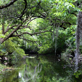 Creeks of Louisiana by Casey Woolf - Nature Up Close Water