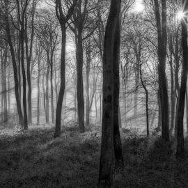 Winter Morning Woods by Ceri Jones - Landscapes Forests ( winter, oxfordshire, trees, forest, woodland, morning, woods,  )