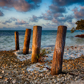 Pilings at Anne's Beach by Tim Azar - Landscapes Beaches ( shore, tim azar, tropical, florida keys, anne's beach, ocean, beach, pilings, landscape, salt water, mangrove, coast, 2 exposures, tree, florida, tide, shoreline, cloudy, anne eaton, water, clouds, islamorada, sand, maritime forest, hdr, keys, roots, nik dfine, lower matecumbe key, hdr efex pro 2, sunrise )