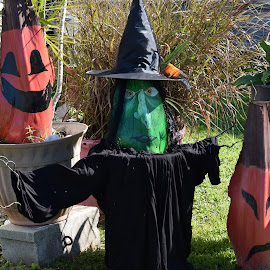 Yard decorations by Priscilla Renda McDaniel - Public Holidays Halloween ( yard, witch, pumpkins, decorations, homemade, halloween )