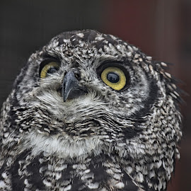 RF 13 by Michael Moore - Animals Birds