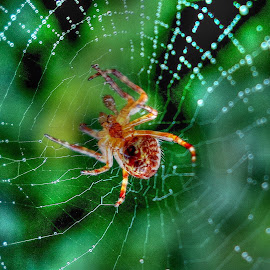 by Keld Helbig Hansen - Animals Insects & Spiders