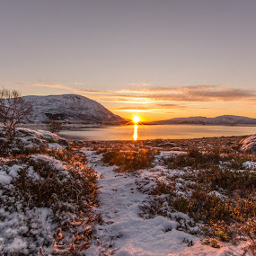 Sunset arctic by Benny Høynes - Landscapes Sunsets & Sunrises ( sky, winter, sunset, snow, sea, arctic, colours, norway,  )