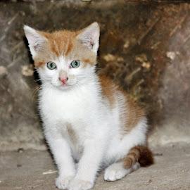by Carola Mellentin - Animals - Cats Kittens