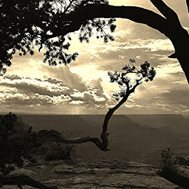 Grand Canyon by Kaushik Bera - Nature Up Close Trees & Bushes (  )