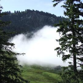 by Serguei Ouklonski - Landscapes Cloud Formations ( sky, tree, season, switzerland, cloud, summer, forest, pine, landscape, fir, alpine )