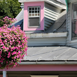 Pink Lady by Leah Zisserson - Buildings & Architecture Homes ( woodstock, white, pink, street scene, house, flowers )